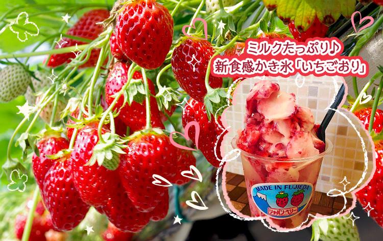 ラストいちごの感謝祭in静岡★