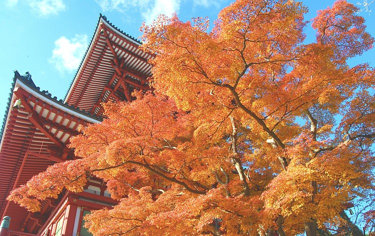 成田山公園(イメージ)