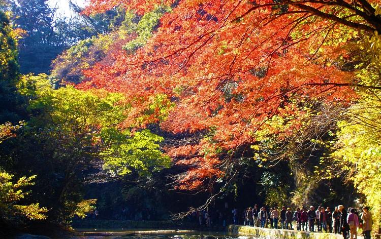 粟又の滝(イメージ)