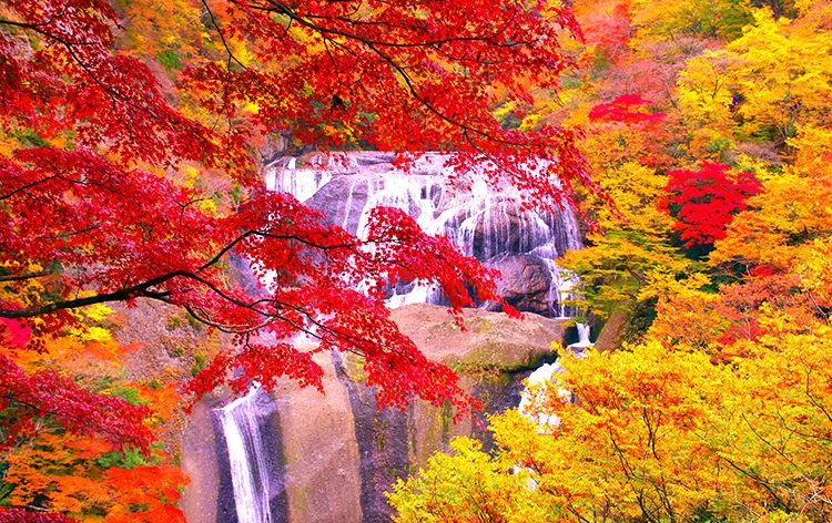 袋田の滝(イメージ)