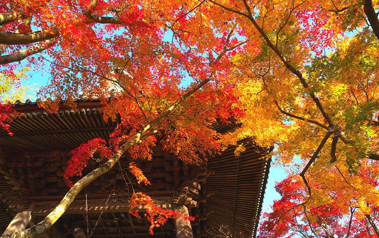修善寺温泉(イメージ)