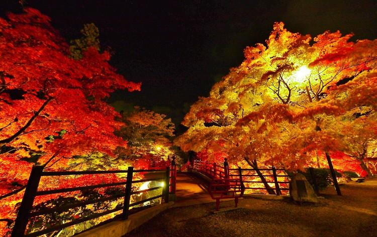 弥彦公園もみじ谷ライトアップ(イメージ)