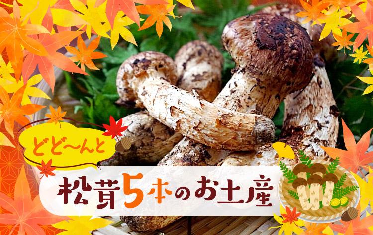 松茸1箱お土産(イメージ)