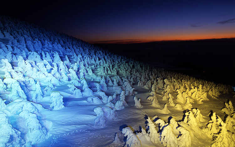 蔵王・樹氷ライトアップ(イメージ)