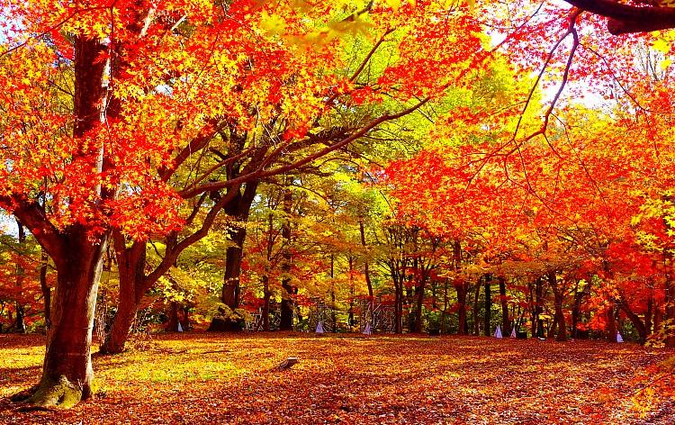 国営武蔵丘陵森林公園(イメージ)