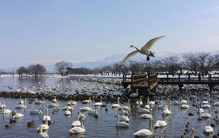 瓢湖(イメージ)