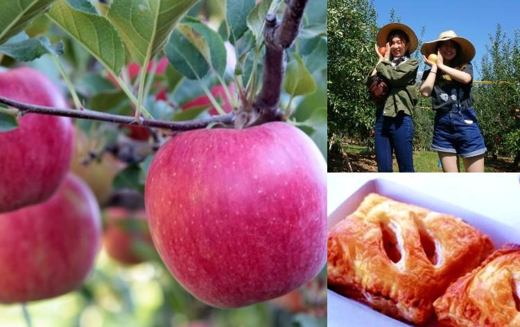 信州りんごもぎ取り&アップルパイ作り(イメージ)