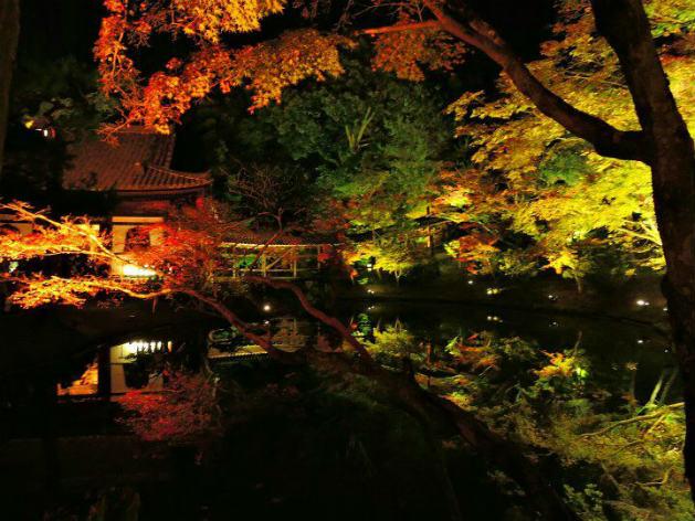 高台寺紅葉ライトアップ(イメージ)