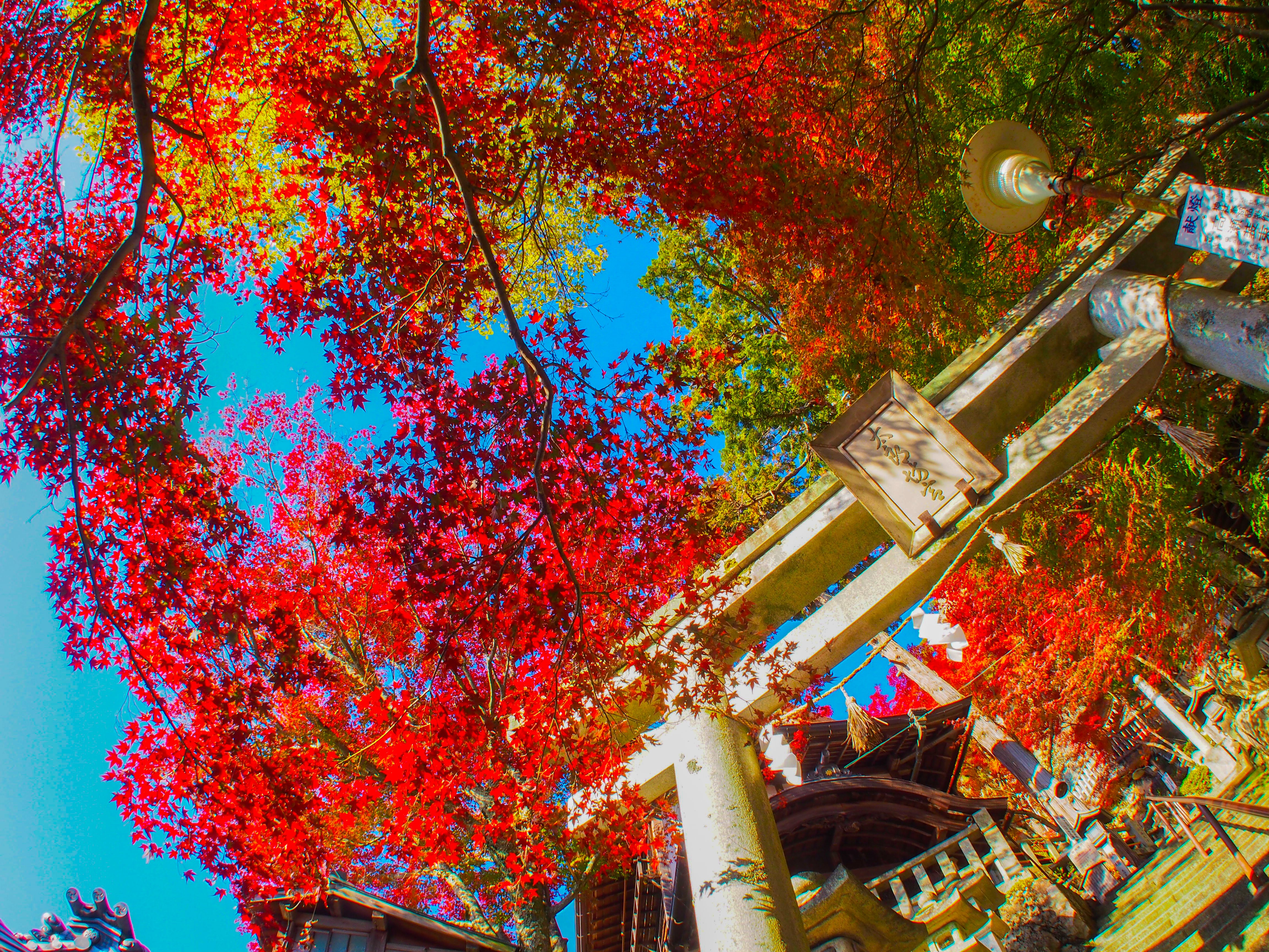太郎坊宮(紅葉/イメージ)©東近江市観光協会