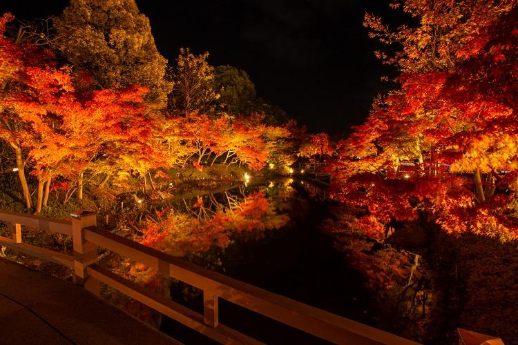 なばなの里 紅葉ライトアップ(11月~12月頃/イメージ)