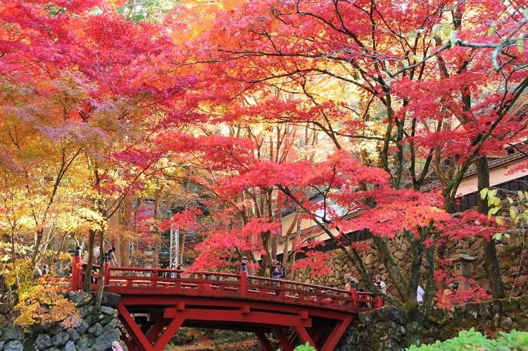 両界山横蔵寺(紅葉/イメージ)©(一社)岐阜県観光連盟