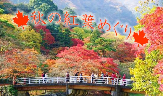 養老公園(紅葉/イメージ)©養老公園