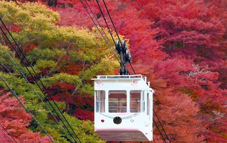吉野山の紅葉(11月頃/イメージ)