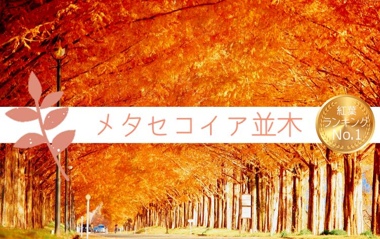 メタセコイア並木(11月下旬頃/イメージ)