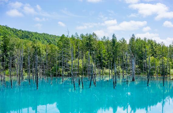 青い池/イメージ