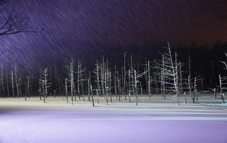 ライトアップ美瑛青い池(冬)/イメージ