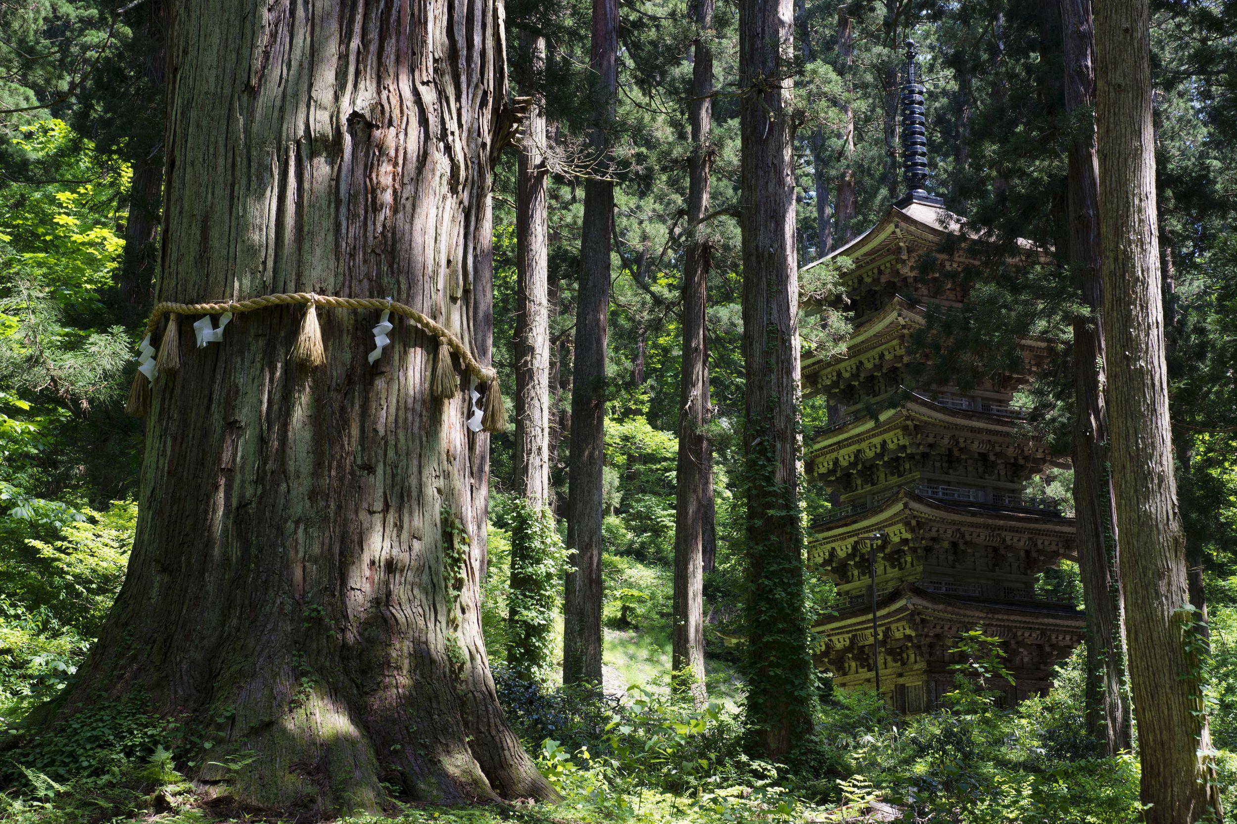 羽黒山五重塔 イメージ